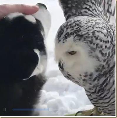 OwlAndDog